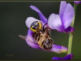 Örümcek ve Bal arısı (Ankara 2013)