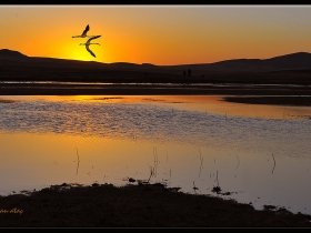 Flamingo - Gölbaşı, Ankara