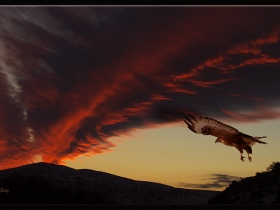 Kızıl gökyüzünde bir Kızılşahin
