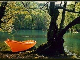 1986 Ankara (Orman, Doğa ve İnsan Fotoğraf Yarışması 1.lik ödülü)