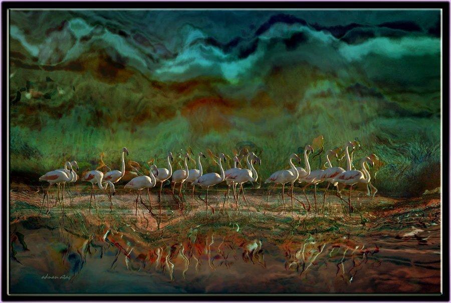 Flamingo - Phoeniconaias - Flamingo (Gölbaşı 2012) 4