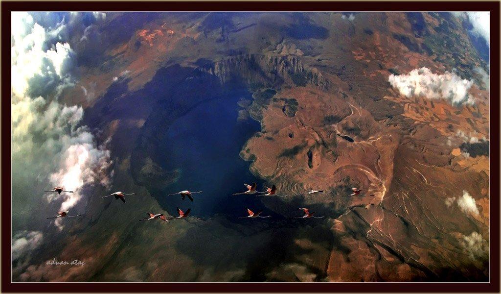Flamingo - Phoeniconaias - Flamingo (Van 2009) ve Nemrut Krater Gölü