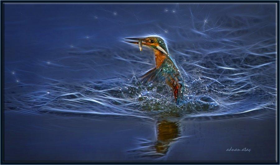 Yalıçapkını - Alcedo atthis - Kingfisher (Gölbaşı 2013) 5