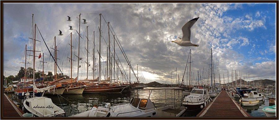 Gümüş martı - larus michahellis - Yellow legged Gull (Bodrum 2014)